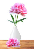 Beautiful pink peony in white vase on wooden table isolated on w Stock Images