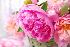 Beautiful pink peony in wicker basket Stock Photos