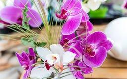 Beautiful pink phalaenopsis orchids royalty free stock photo