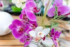 Beautiful pink phalaenopsis orchids Stock Photos