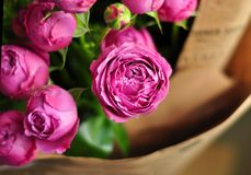 Beautiful pink pion-shaped rose.Bouquet Shrub roses.  royalty free stock images