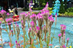 Beautiful Pink Plant by Pool Stock Photo