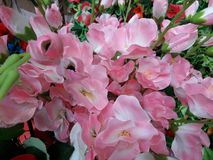 A beautiful pink plastic friver Color flowers in Garden stock photo