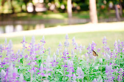Beautiful pink and purple flower. Stock Photo