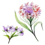 Beautiful pink and purple iberis flower on a stem. Floral set candytuft flowers, leaves, buds. Isolated on white background. Watercolor painting. Hand painted Stock Photo