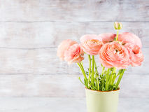 Beautiful pink ranunculus bouquet Royalty Free Stock Images