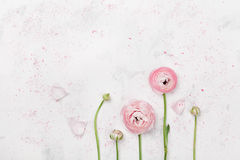 Beautiful pink ranunculus flowers on white table top view. Floral border in pastel color. Wedding mockup in flat lay style. Beautiful pink ranunculus flowers on