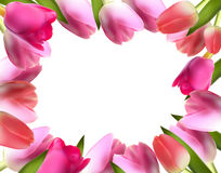 Beautiful Pink Realistic Tulip Frame Vector Royalty Free Stock Photos