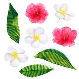 Beautiful pink red flowers hibiscus and white frangipani or plumeria. Hand drawn watercolor illustration. Isolated on white vector illustration