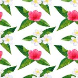 Beautiful pink red flowers hibiscus and white frangipani or plumeria. Seamless pattern. Hand drawn watercolor illustration stock illustration
