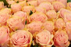 Beautiful pink rosas in flower shop. stock photography