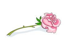 Beautiful pink rose Stock Photos