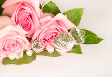Beautiful pink rose Royalty Free Stock Photos