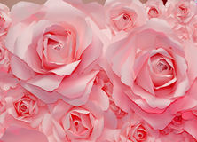 Beautiful pink rose background Royalty Free Stock Images