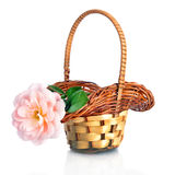 Beautiful  pink rose in basket Royalty Free Stock Images