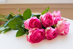 Beautiful pink rose. Lie on white table Royalty Free Stock Photo