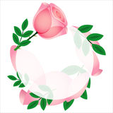 Beautiful pink rose card,  Stock Images