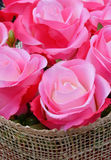 Beautiful pink rose closeup Stock Image