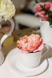 Beautiful pink rose in cup Royalty Free Stock Image