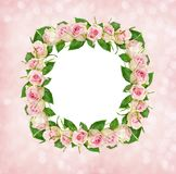 Beautiful pink rose flowers in square frame with white card for Stock Image