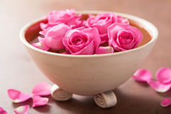 Beautiful pink rose flowers in vase Stock Photography