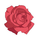 Beautiful pink rose, isolated on white background. Botanical silhouette of flower. Flat stylization vintage color. Vector illustration Royalty Free Stock Image
