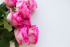 Beautiful pink rose. Lie on white table Royalty Free Stock Images