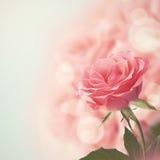 Beautiful Pink Rose. Retro style toned. Royalty Free Stock Image
