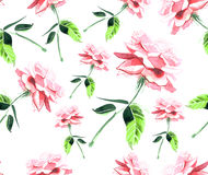 Beautiful pink rose seamless pattern watercolor Stock Photography