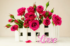 Beautiful pink rose in wooden box Stock Images