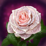 Beautiful pink rose with words Stock Photography