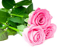 Beautiful pink roses. Bouquet of beautiful pink roses Royalty Free Stock Photography