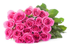 Beautiful pink roses bouquet isolated Royalty Free Stock Photography