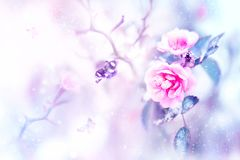 Beautiful pink roses and butterflies in the snow and frost on a blue and pink background. Snowing. Artistic winter natural image. Selective and soft focus stock photos