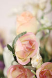 Beautiful pink roses close up Stock Photos