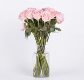 Beautiful pink roses flower Royalty Free Stock Images