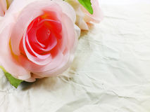Beautiful pink roses flower on paper texture background with filters color and space for copy Royalty Free Stock Image