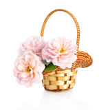 Beautiful pink roses flowers  in basket, isolated on white background Royalty Free Stock Photos