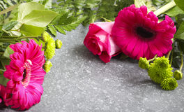 Beautiful pink roses and gerberas Stock Image