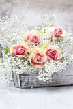 Beautiful pink roses and Gypsophila (Baby's-breath flowers)