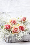Beautiful pink roses and Gypsophila (Baby's-breath flowers) Stock Photos
