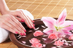 Beautiful pink roses held in female hands Stock Photo