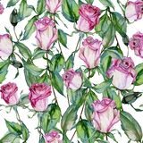 Beautiful pink roses on long stems with green leaves on white background. Seamless floral pattern. Watercolor painting. Hand drawn and painted illustration vector illustration