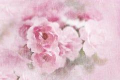 Beautiful pink roses Stock Image