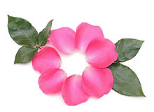 Beautiful pink roses petals Stock Photos