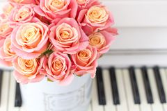 Beautiful pink roses in a round box on the piano. Roses in a Hat Box. Beautiful pink roses in a round box on the piano stock photography