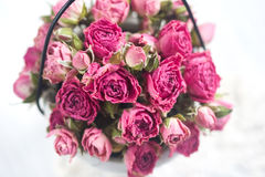 Beautiful pink roses small top view Royalty Free Stock Photography
