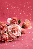Beautiful pink roses with snow Stock Images