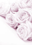 Beautiful pink roses toned in sepia as wedding background. Soft Stock Photo