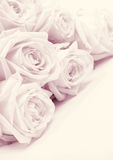 Beautiful pink roses toned in sepia as wedding background. Soft Royalty Free Stock Photos